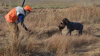 Bwpgca Pheasant Hunt