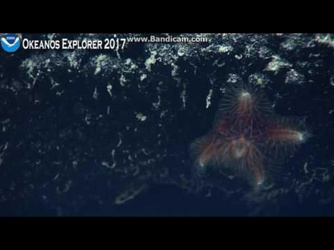 Okeanos Northeastern Margin Kingman Reef