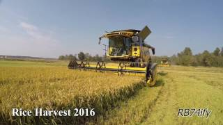 RICE HARVEST 2016 in North West ITALY - The Best of RB74ify