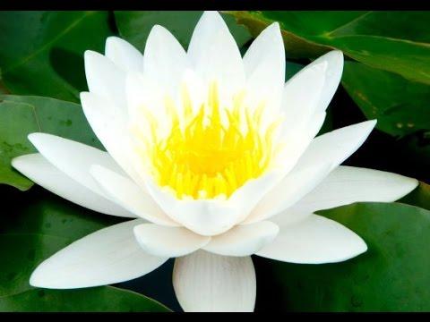 Zen Music, Relaxing Music, Calming Music, Stress Relief Music, Peaceful Music, Relax, �