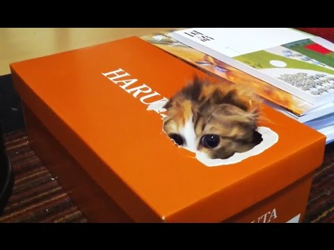 'Kittens Playing in Boxes Compilation' || CFS