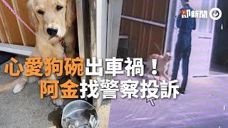 黃金獵犬「心愛狗碗」被車壓扁了!牠委屈縮牆角...見警察急衝投訴|看新聞|寵物