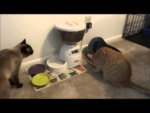 Automatic cat feeder (ended up a fail for me)