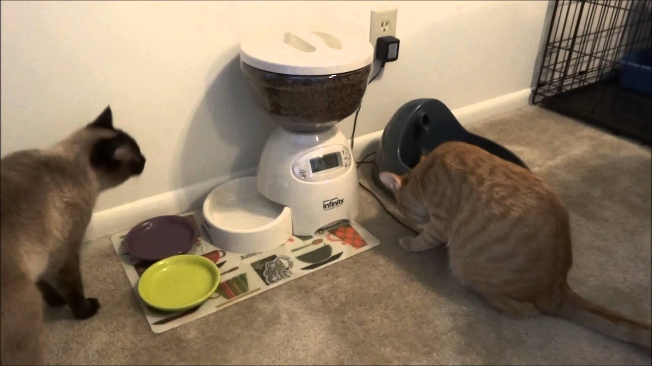 Cat Food Ratings >> Automatic cat feeder (ended up a fail for me) - YouTube