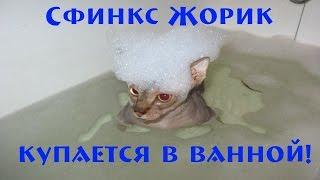Донской Жорик купается в ванной! Как правильно купать сфинксов! [#Сфинкс]
