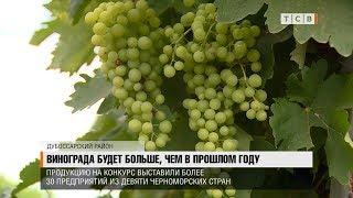 Винограда будет больше, чем в прошлом году