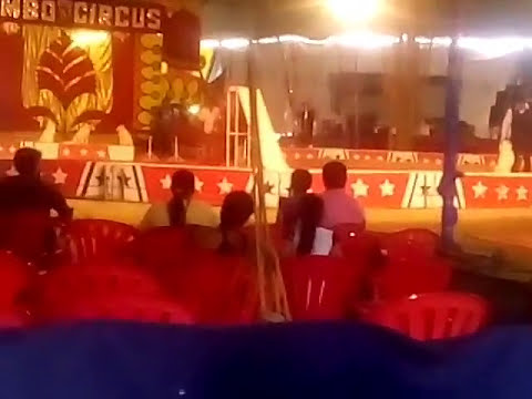 Animals Dogs funny act in circus, olate dog show in great jumbo afro | shri hari