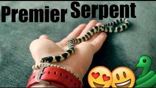 Mon premier serpent ! Nourrissage !