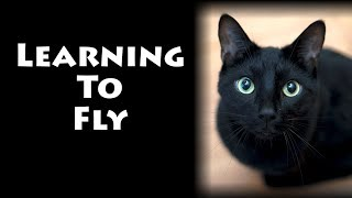 Learning to Fly - Lyric Version (Official Music Video) Cat Song