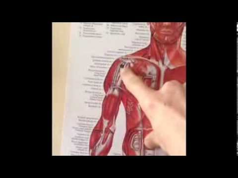 Push Ups And Shoulder Pain 3-17-14 - YouTube