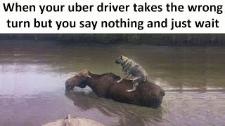 Uber Animal Memes Are Your New Favorite Memes