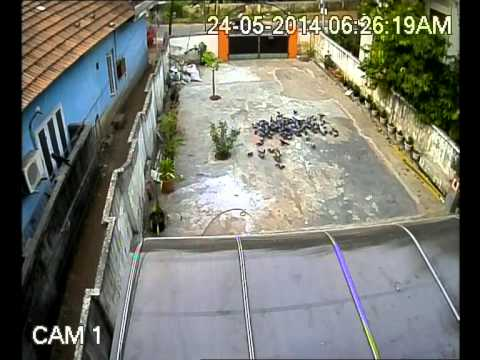 Feeding Pigeons - CCTV Camera Capture
