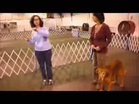 Pet Partners Evaluation Demonstration