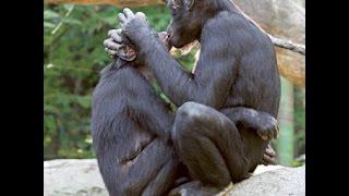 ЛУЧШИЕ ПРИКОЛЫ ЖИВОТНЫЕ 18+ // Best video fun animals 18+