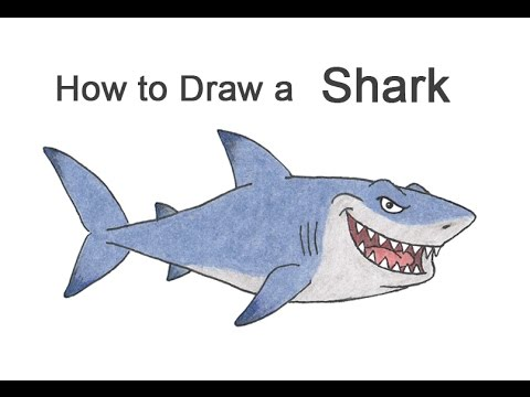 How To Draw A Shark (Cartoon)