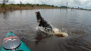 QUANDO A GENTE CONTA PASSA POR MENTIROSO... Pescaria. Pirarucu gigante.