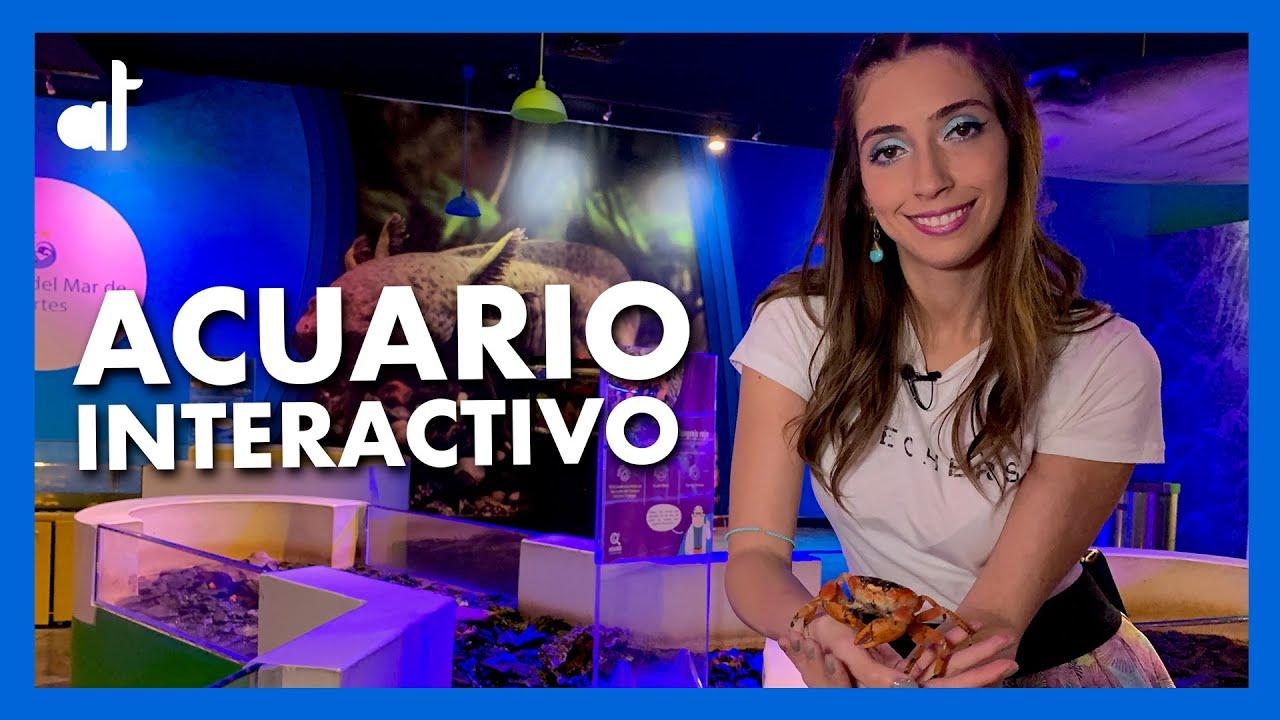 ACUARIO Inbursa 2020 / ACUARIO INTERACTIVO / Ale Toledano