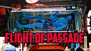Avatar ride FLIGHT OF PASSAGE