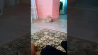 Кот боится моего платка