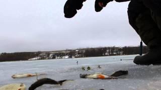 Зимняя рыбалка 2015. Самойловка Белгородская область 28.02.2015.