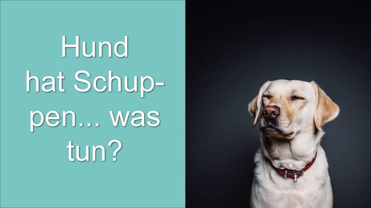 Hund Hat Schuppen Was Tun