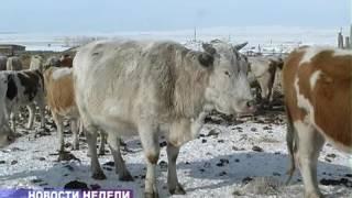 Новости недели 3 декабря 2016 (ТВ-5 Приаргунск)