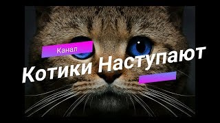 Забавные коты и другие животные!! Прикол! Смешное видео про котиков!!!