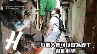動物義工 獨立貓義工教如何照顧流浪貓