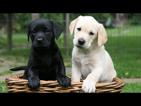 15 Super Low Maintenance Dog Breeds