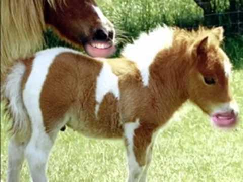 poney marrant