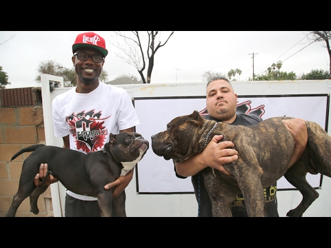 The $75,000 Micro Pit Bull - YouTube