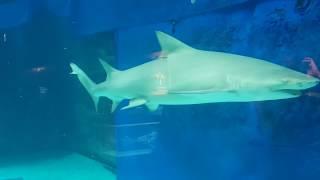 [아쿠아리움] 진짜 상어를 제대로 보세요!!! 으악!!…