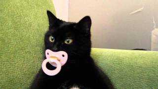 кошка Стешка не отдает пустышку