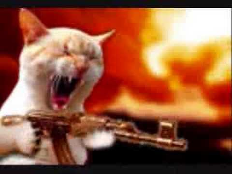 Cat with a gun - YouTube