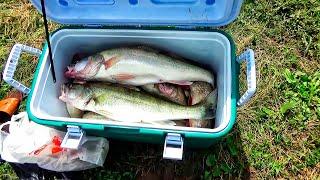 ВОБЛЕР, КОТОРЫЙ ЛОВИТ! Нахреначили рыбы! РЫБАЛКА УДАЛАСЬ! Впервые ловили этим способом!