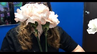 Try It Science: Changing the color of flowers