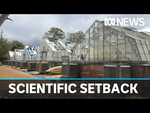 Hail damage pushes back ANU plant experiments | ABC News