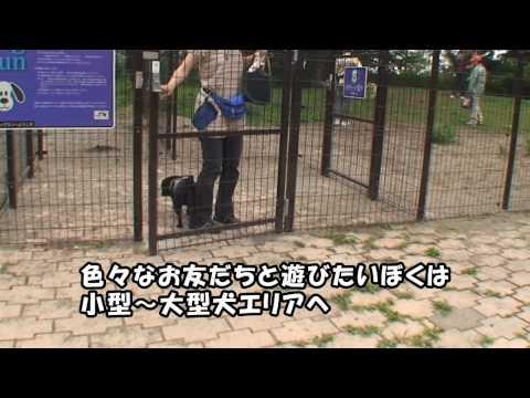 黒パグナイトの東北道・佐野SA(下り) ドッグラン ラブラブ大混戦☆彡