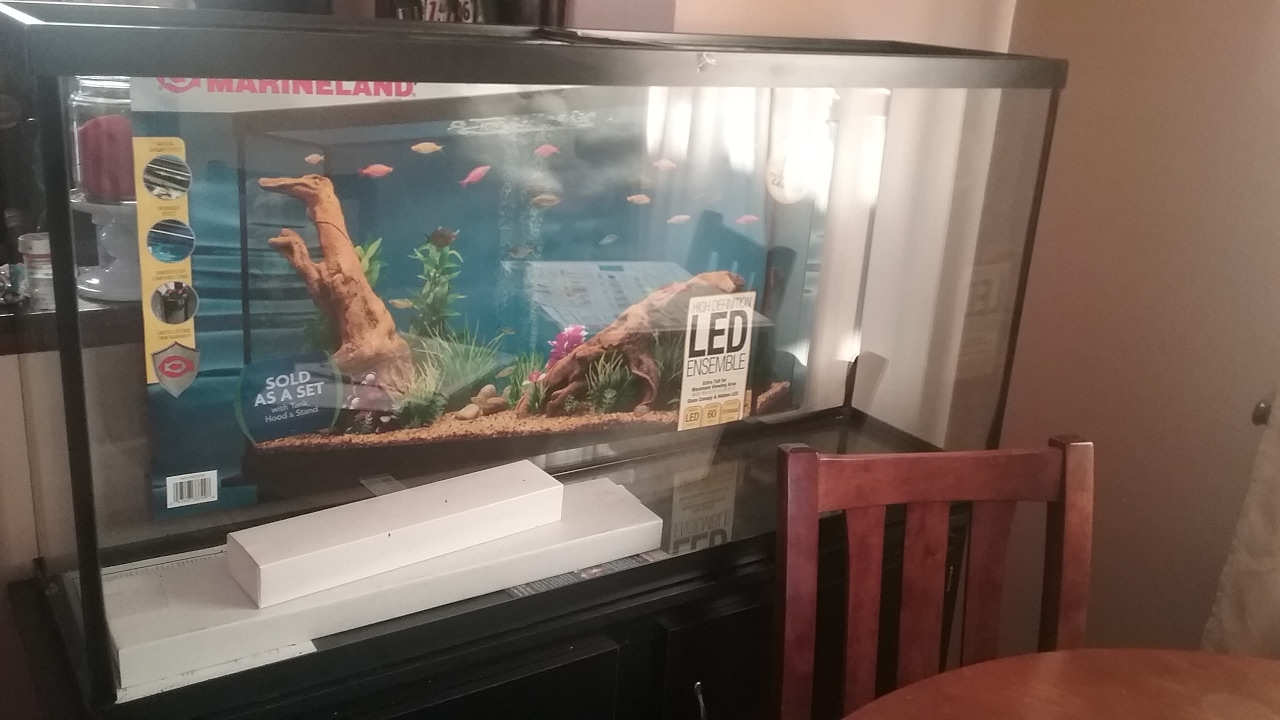 60 gallon tank setup youtube