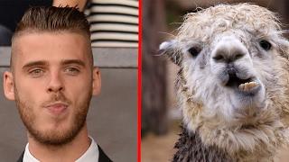18 футболистов, похожих на животных