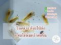 โกสด่าง ต้องไปต่อ [Make is Me] by BOOMz Crayfish EP.40
