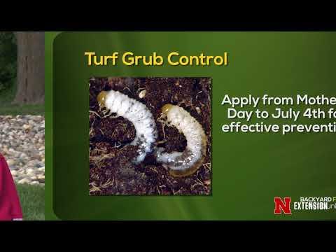 White Grub Control
