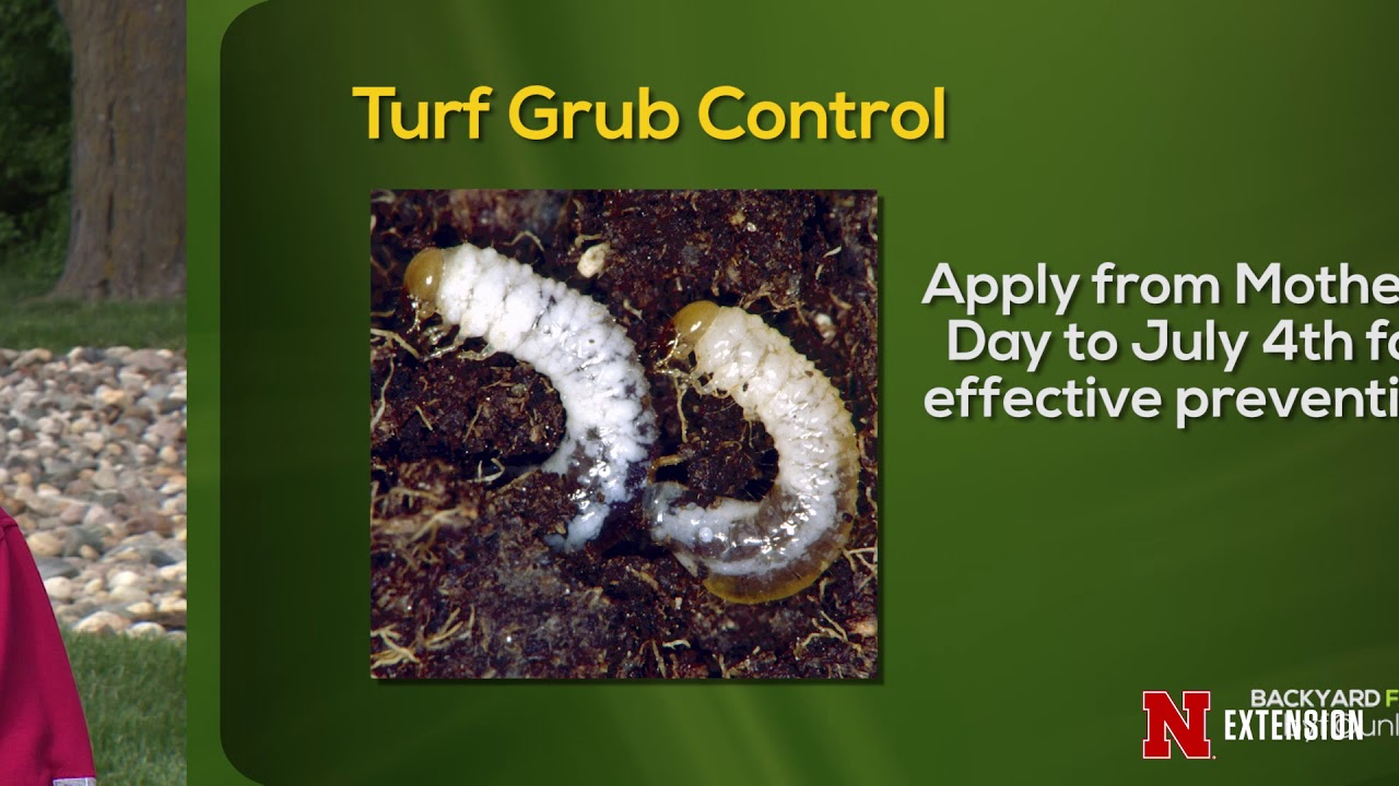 White Grub Control Youtube