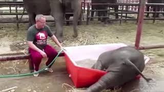 -Все, завязываю бухать... Смешные короткие видео про животных и хозяев 720p