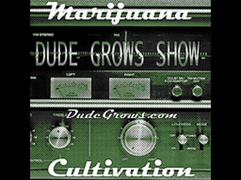 #39 Dude Grows Show Growing Marijuana