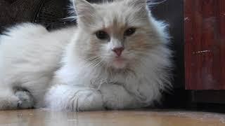 Посвящается памяти моему коту Васе