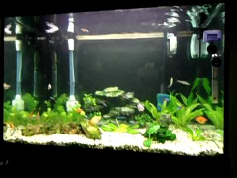 new fluval 306 canister & 2 sae on tropical tank. -