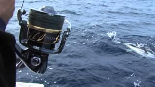 Italian Fishing TV - Shimano - Spinning Offshore Winter Tuna