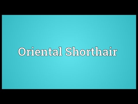 Oriental Shorthair Meaning