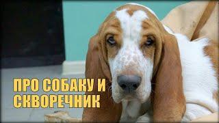 Про собаку и скворечник | Просьба подписчика